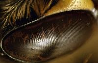 Bites akys 2