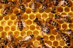 Bites pavasarį